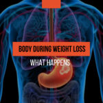 What happens to the body during weight loss